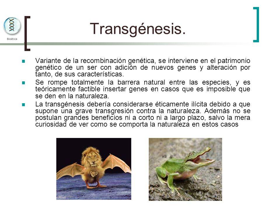 Transgénesis. Variante de la recombinación genética, se interviene en el patrimonio genético de un ser con adición de nuevos genes y alteración por ta