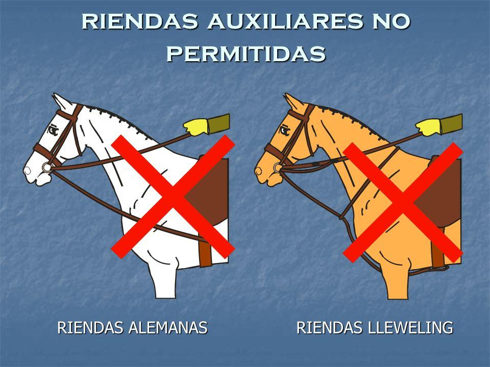 RIENDAS LLEWELING RIENDAS ALEMANAS riendas auxiliares no permitidas