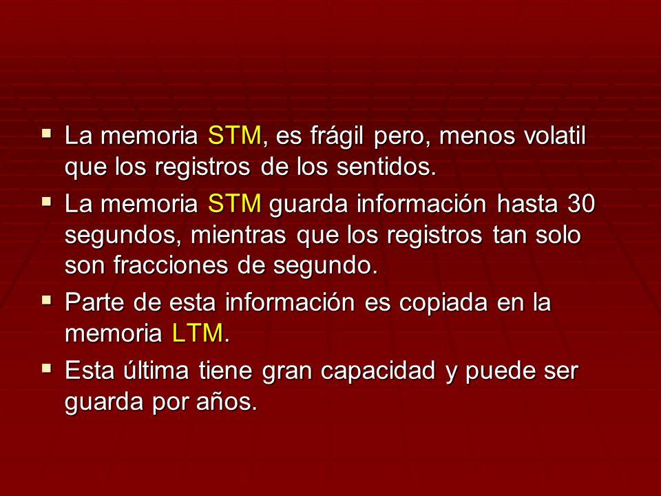 La memoria STM, es frágil pero, menos volatil que los registros de los sentidos. La memoria STM, es frágil pero, menos volatil que los registros de lo