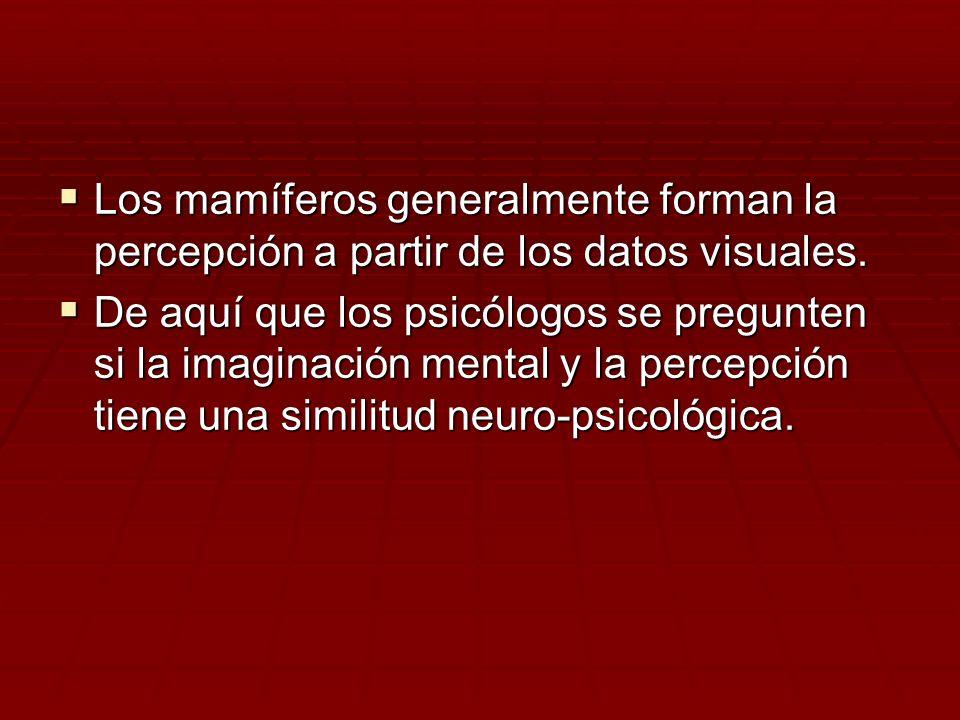Los mamíferos generalmente forman la percepción a partir de los datos visuales. Los mamíferos generalmente forman la percepción a partir de los datos