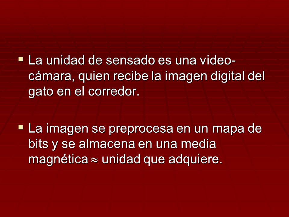 La unidad de sensado es una video- cámara, quien recibe la imagen digital del gato en el corredor. La unidad de sensado es una video- cámara, quien re