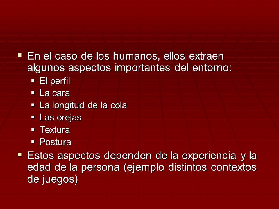 En el caso de los humanos, ellos extraen algunos aspectos importantes del entorno: En el caso de los humanos, ellos extraen algunos aspectos important