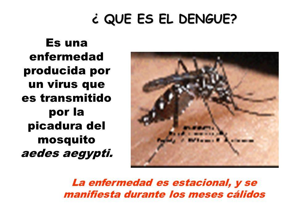 Es una enfermedad producida por un virus que es transmitido por la picadura del mosquito aedes aegypti.