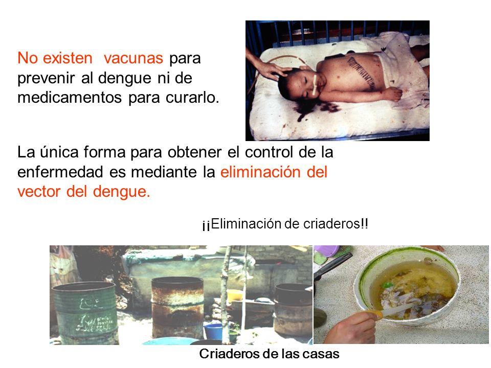 ¿CUALES SON LOS RIESGOS ¡El DENGUE puede causar la muerte!