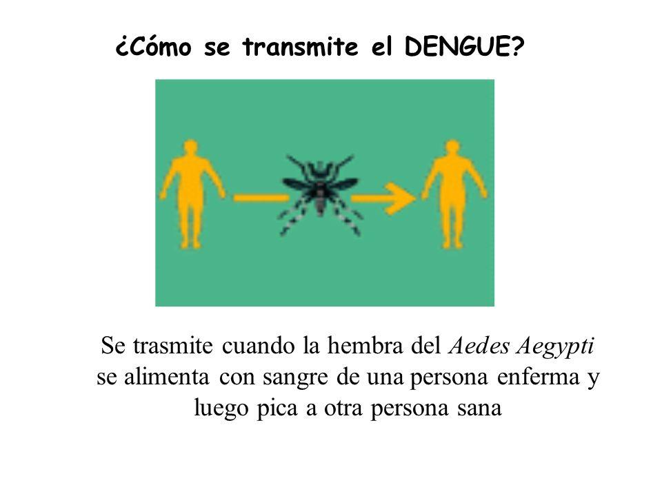 Se trasmite cuando la hembra del Aedes Aegypti se alimenta con sangre de una persona enferma y luego pica a otra persona sana ¿Cómo se transmite el DENGUE?