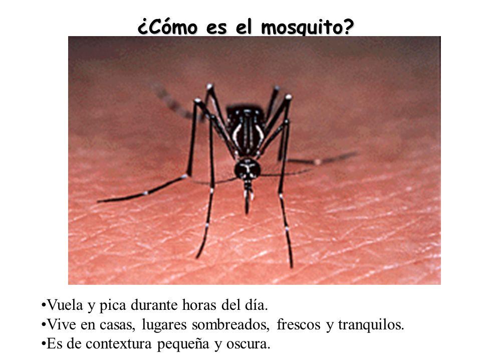 ¿Cómo es el mosquito.Vuela y pica durante horas del día.