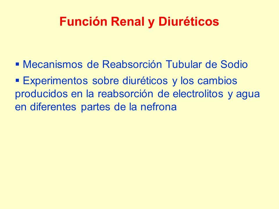 Función Renal y Diuréticos Mecanismos de Reabsorción Tubular de Sodio Experimentos sobre diuréticos y los cambios producidos en la reabsorción de electrolitos y agua en diferentes partes de la nefrona