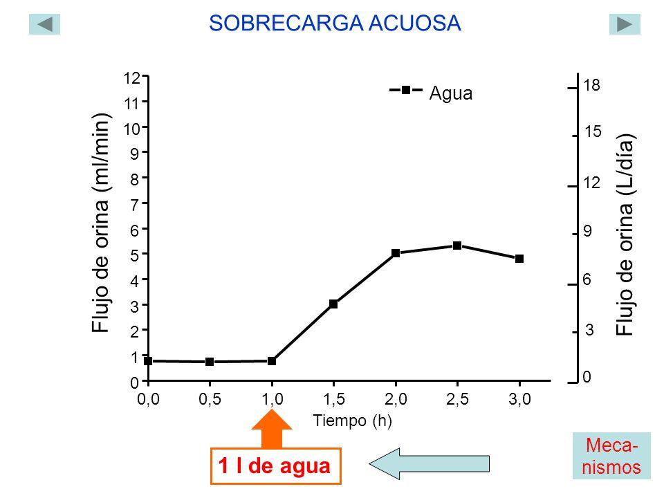 Agua 0,00,51,01,5 2,02,53,0 0 1 2 3 4 5 6 7 8 9 10 11 12 Flujo de orina (ml/min) Tiempo (h) 1 l de agua SOBRECARGA ACUOSA 0 18 12 6 Flujo de orina (L/