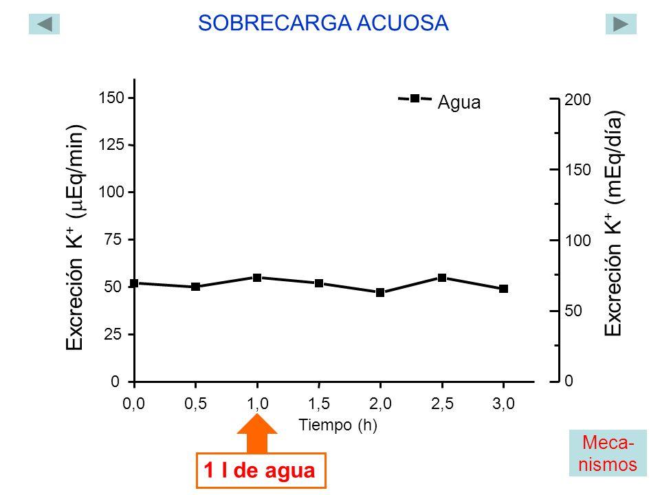 0,00,51,01,52,02,53,0 0 25 50 75 100 125 150 Excreción K + ( Eq/min) Tiempo (h) 1 l de agua Agua SOBRECARGA ACUOSA 0 200 150 100 50 Excreción K + (mEq