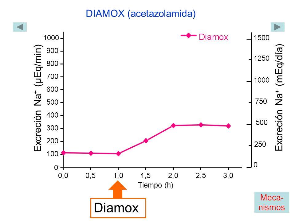 0,00,51,01,52,02,53,0 0 100 200 300 400 500 600 700 800 900 1000 Excreción Na + (µEq/min) Tiempo (h) Diamox DIAMOX (acetazolamida) 1500 1000 Excreción