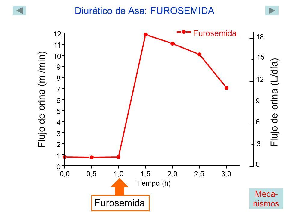 Furosemida 0,00,51,01,5 2,02,53,0 0 1 2 3 4 5 6 7 8 9 10 11 12 Flujo de orina (ml/min) Tiempo (h) Furosemida Diurético de Asa: FUROSEMIDA 0 18 12 6 Flujo de orina (L/día) 3 9 15 Meca- nismos