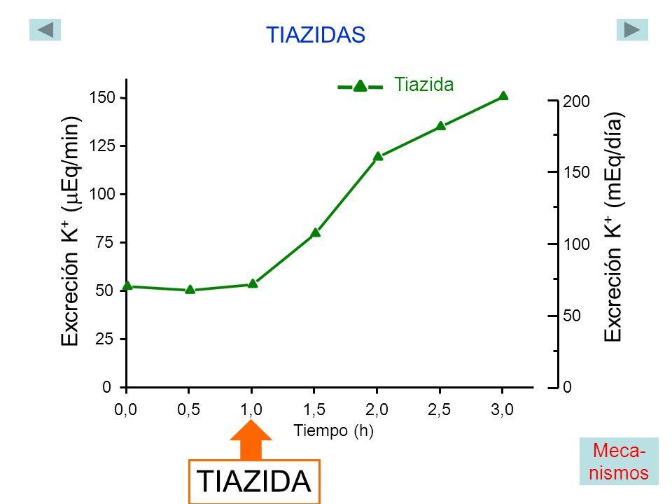 0,00,51,01,52,02,53,0 0 25 50 75 100 125 150 Excreción K + ( Eq/min) Tiempo (h) TIAZIDA TIAZIDAS Tiazida 0 200 150 100 50 Excreción K + (mEq/día) Meca- nismos