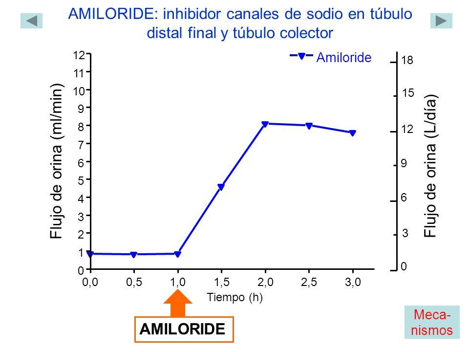 Amiloride 0,00,51,01,5 2,02,53,0 0 1 2 3 4 5 6 7 8 9 10 11 12 Flujo de orina (ml/min) Tiempo (h) AMILORIDE AMILORIDE: inhibidor canales de sodio en túbulo distal final y túbulo colector 0 18 12 6 Flujo de orina (L/día) 3 9 15 Meca- nismos
