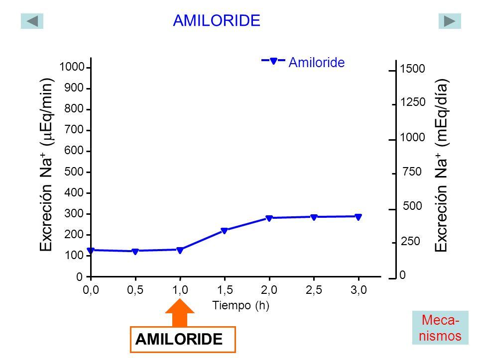 Amiloride 0,00,51,01,52,02,53,0 0 100 200 300 400 500 600 700 800 900 1000 Excreción Na + ( Eq/min) Tiempo (h) AMILORIDE 1500 1000 Excreción Na + (mEq/día) 0 500 250 750 1250 Meca- nismos