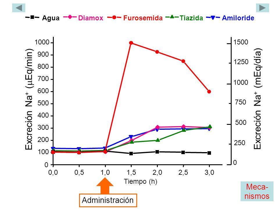 Agua Tiazida Furosemida Diamox Amiloride 0,00,51,01,52,02,53,0 0 100 200 300 400 500 600 700 800 900 1000 Excreción Na + ( Eq/min) Tiempo (h) Administración 1500 1000 Excreción Na + (mEq/día) 0 500 250 750 1250 Meca- nismos