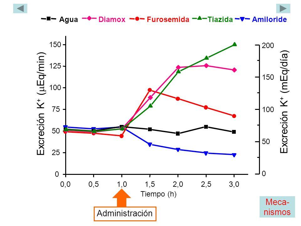 Agua Tiazida Furosemida Diamox Amiloride 0,00,51,01,52,02,53,0 0 25 50 75 100 125 150 Excreción K + ( Eq/min) Tiempo (h) Administración 0 200 150 100 50 Excreción K + (mEq/día) Meca- nismos