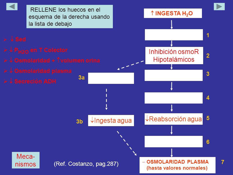 Meca- nismos INGESTA H 2 O 1 Inhibición osmoR Hipotalámicos 2 3 4 Reabsorción agua 5 Ingesta agua 3a 6 7 RELLENE los huecos en el esquema de la derecha usando la lista de debajo OSMOLARIDAD PLASMA (hasta valores normales) Sed P H2O en T Colector Osmolaridad + volumen orina Osmolaridad plasma Secreción ADH 3b (Ref.