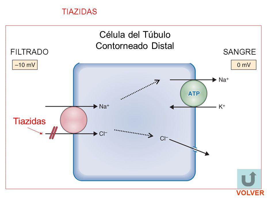 Tiazidas TIAZIDAS FILTRADOSANGRE Célula del Túbulo Contorneado Distal VOLVER