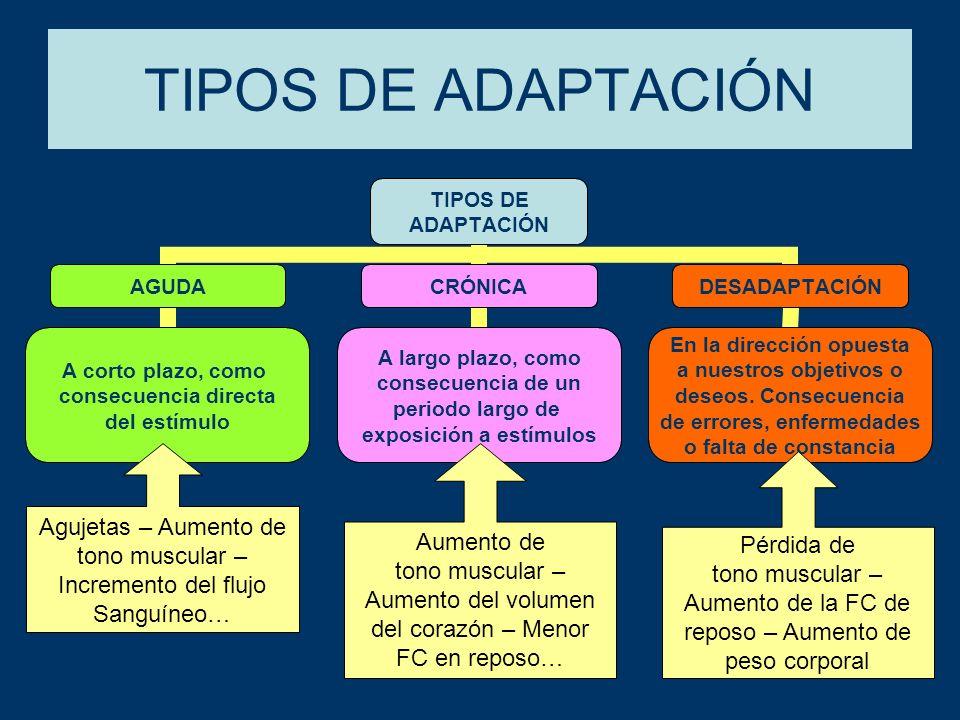 PRINCIPALES ADAPTACIONES FISIOLÓGICAS: Cardiacas.Respiratorias.