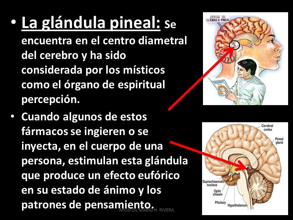 La glándula pineal: Se encuentra en el centro diametral del cerebro y ha sido considerada por los místicos como el órgano de espiritual percepción.