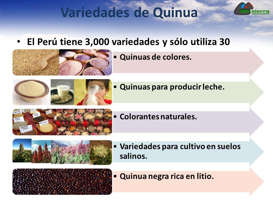 Variedades de Quinua El Perú tiene 3,000 variedades y sólo utiliza 30 Quinuas de colores. Quinuas para producir leche. Colorantes naturales.Variedades