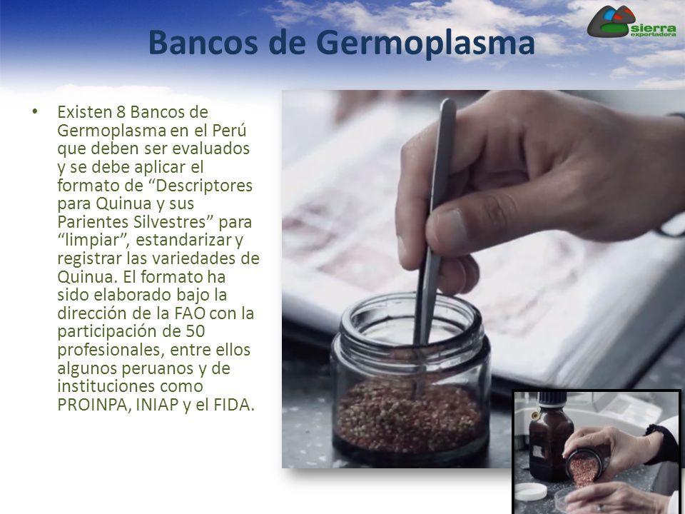Bancos de Germoplasma Existen 8 Bancos de Germoplasma en el Perú que deben ser evaluados y se debe aplicar el formato de Descriptores para Quinua y su