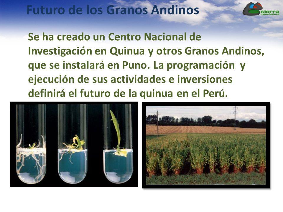 Futuro de los Granos Andinos Se ha creado un Centro Nacional de Investigación en Quinua y otros Granos Andinos, que se instalará en Puno. La programac