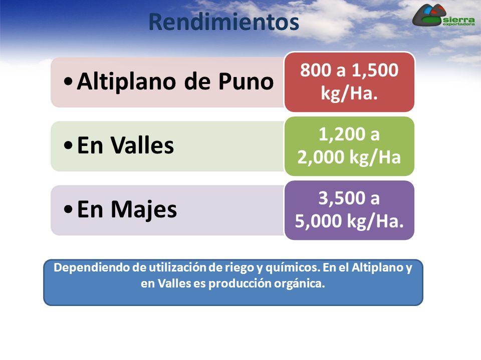Rendimientos Altiplano de Puno 800 a 1,500 kg/Ha. En Valles 1,200 a 2,000 kg/Ha En Majes 3,500 a 5,000 kg/Ha. Dependiendo de utilización de riego y qu