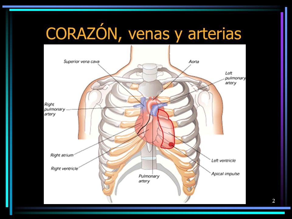 2 CORAZÓN, venas y arterias