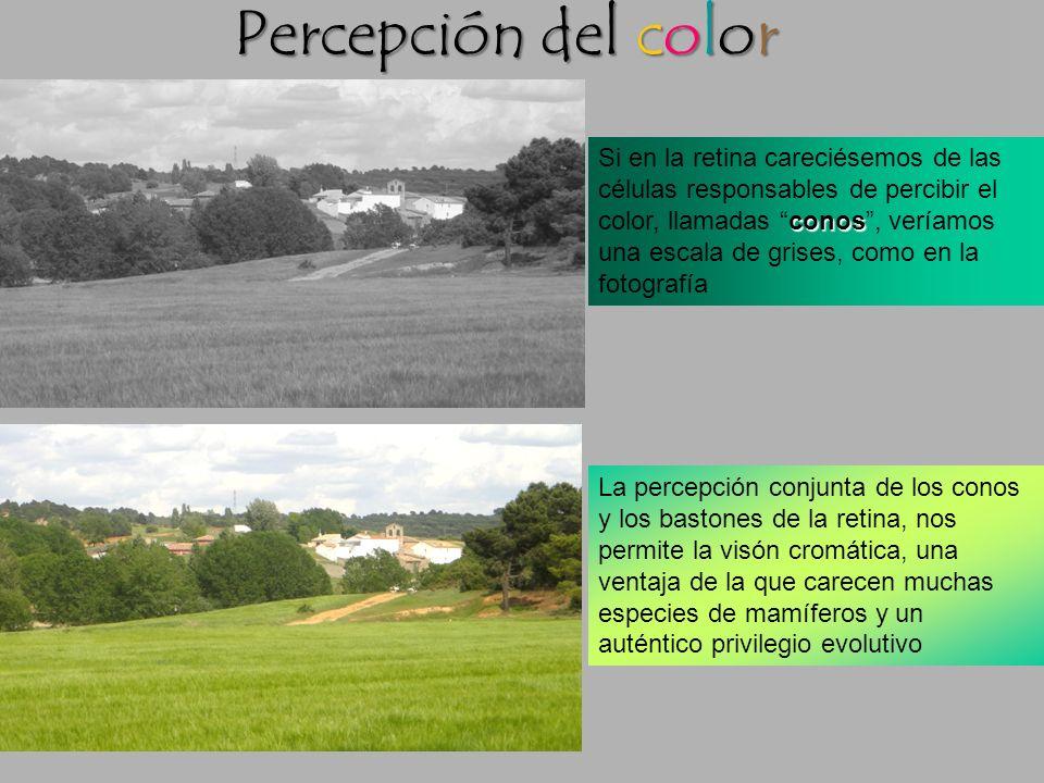 Color: Mezclas aditiva y sustractiva Los pigmentos reflejan algunas longitudes de onda (colores) que componen la luz y absorben otros. Las mezclas de