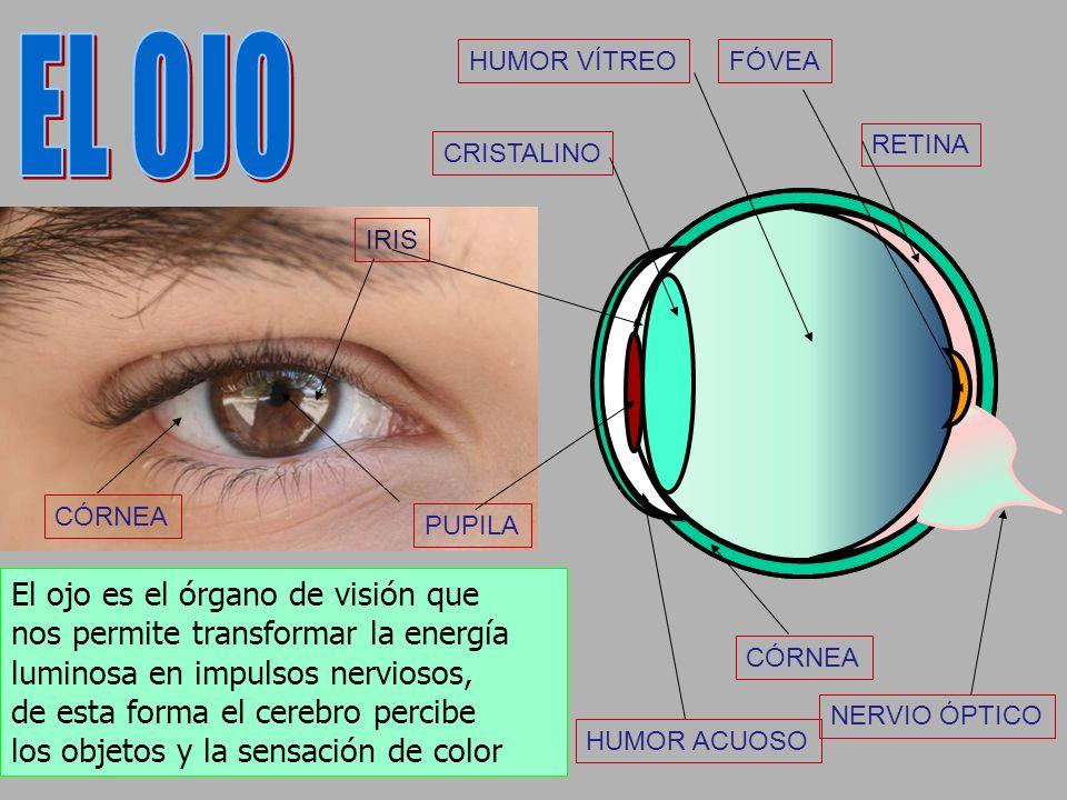 Si en la retina careciésemos de las células responsables de percibir el conos color, llamadas conos, veríamos una escala de grises, como en la fotogra