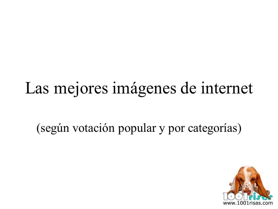 Las mejores imágenes de internet (según votación popular y por categorías)