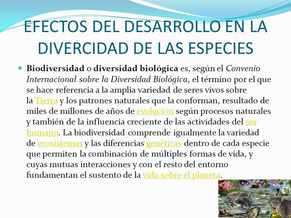 EFECTOS DEL DESARROLLO EN LA DIVERCIDAD DE LAS ESPECIES Biodiversidad o diversidad biológica es, según el Convenio Internacional sobre la Diversidad B