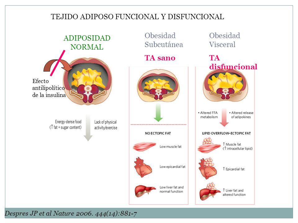 Obesidad Subcutánea TA sano Obesidad Visceral TA disfuncional ADIPOSIDAD NORMAL Despres JP et al Nature 2006. 444(14):881-7 Efecto antilipolítico de l