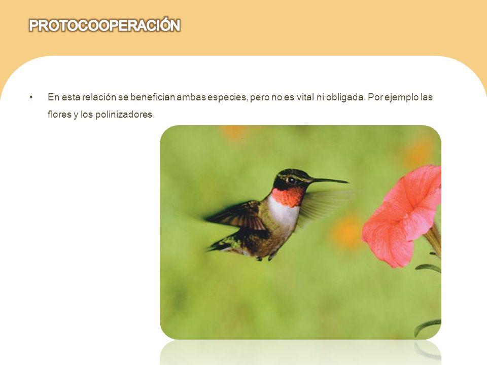 En esta relación se benefician ambas especies, pero no es vital ni obligada. Por ejemplo las flores y los polinizadores.