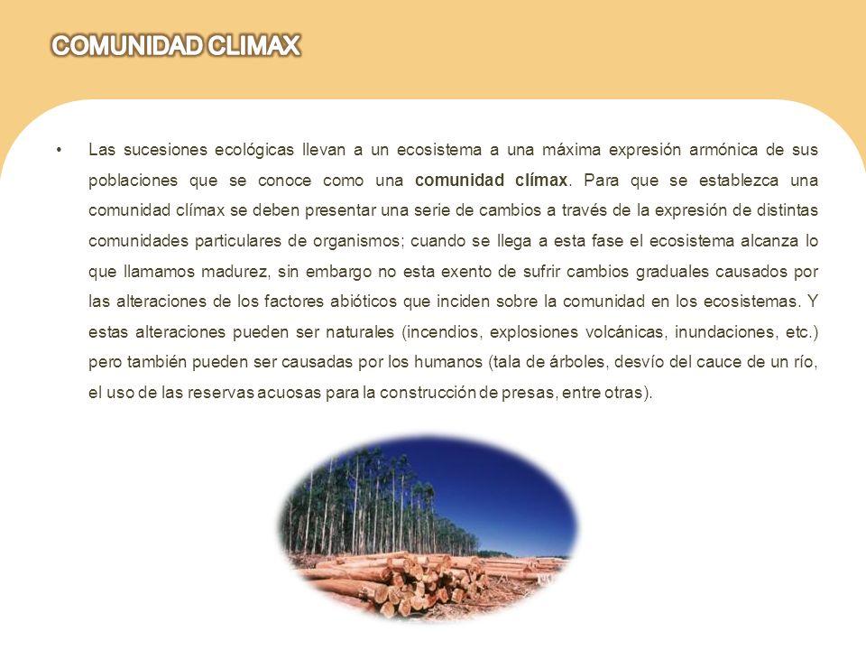 Las sucesiones ecológicas llevan a un ecosistema a una máxima expresión armónica de sus poblaciones que se conoce como una comunidad clímax. Para que