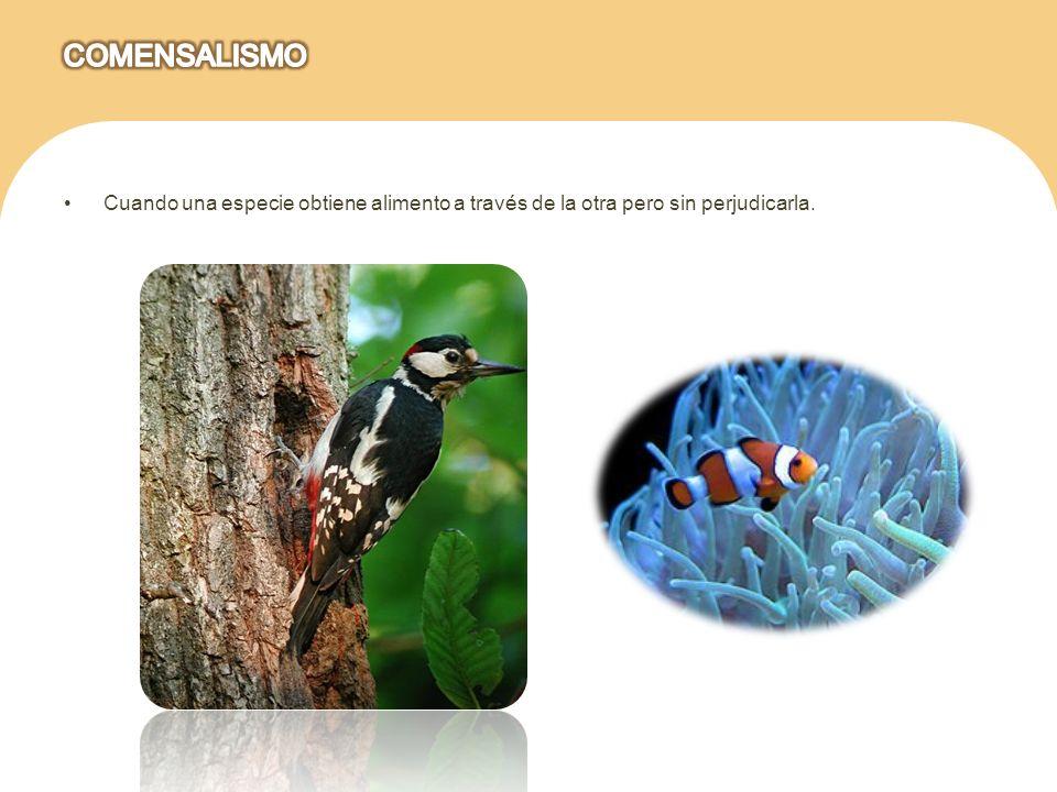 Las dos especies relacionadas se benefician mutuamente al grado de que la relación puede ser vital.