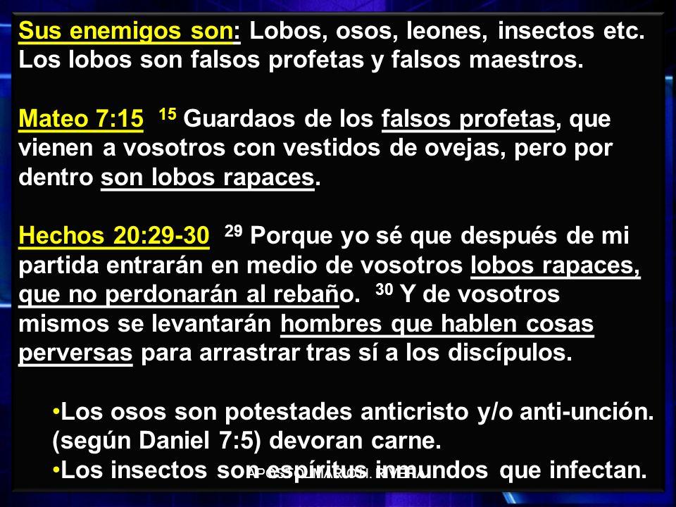 26 Sus enemigos son: Lobos, osos, leones, insectos etc. Los lobos son falsos profetas y falsos maestros. Mateo 7:15 15 Guardaos de los falsos profetas