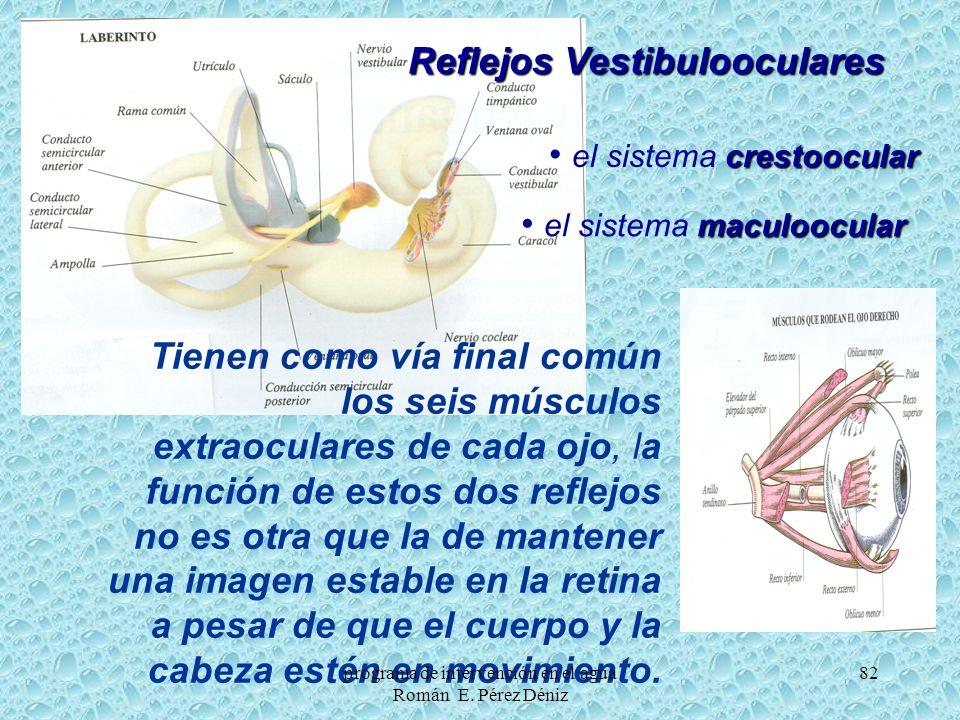 82 Reflejos Vestibulooculares Tienen como vía final común los seis músculos extraoculares de cada ojo, la función de estos dos reflejos no es otra que