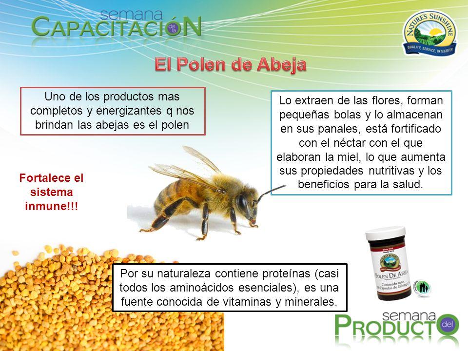 Fortalece el sistema inmune!!! Uno de los productos mas completos y energizantes q nos brindan las abejas es el polen Lo extraen de las flores, forman