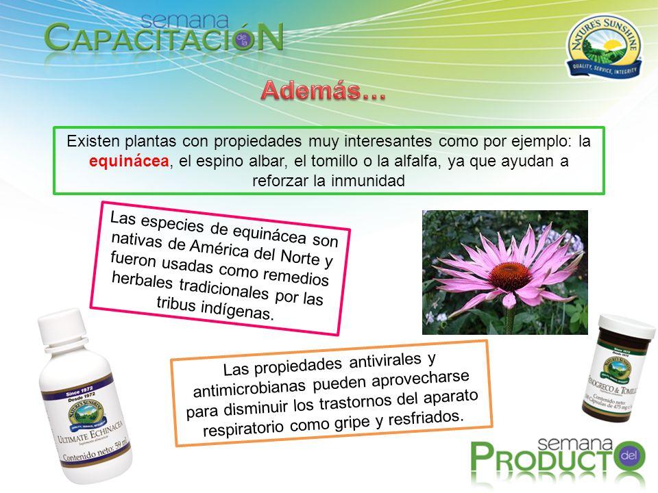 Existen plantas con propiedades muy interesantes como por ejemplo: la equinácea, el espino albar, el tomillo o la alfalfa, ya que ayudan a reforzar la