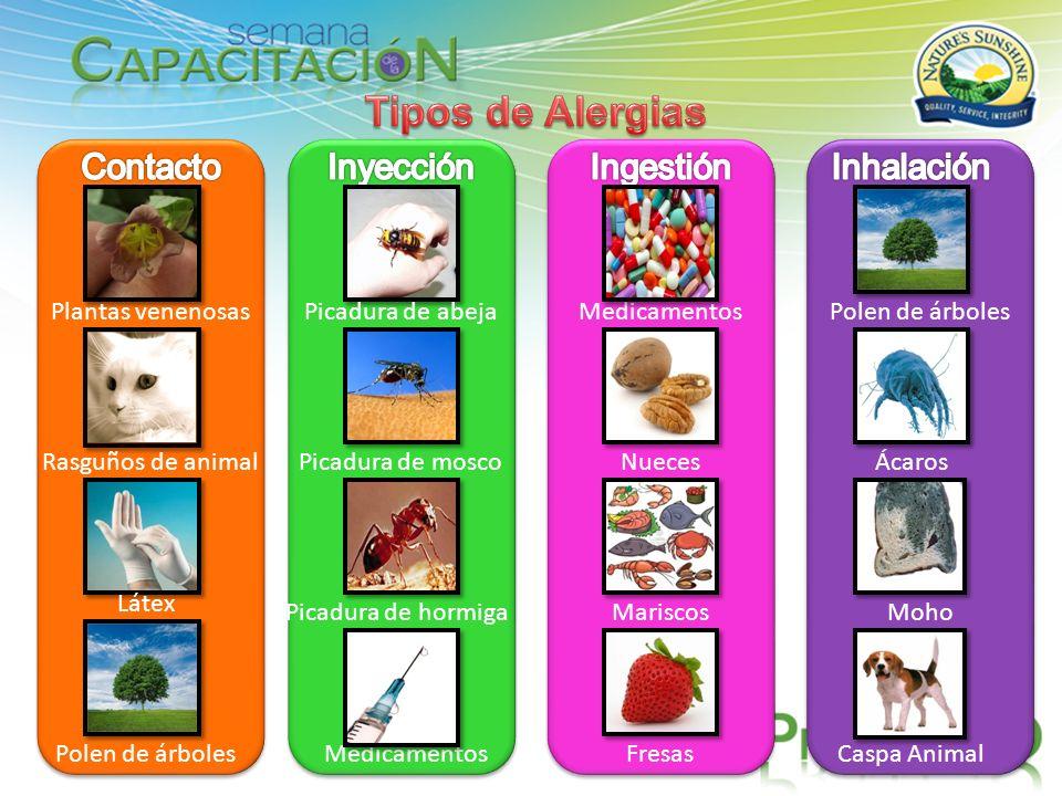 Plantas venenosas Rasguños de animal Látex Polen de árboles Picadura de abeja Picadura de mosco Picadura de hormiga Medicamentos Nueces Mariscos Fresa