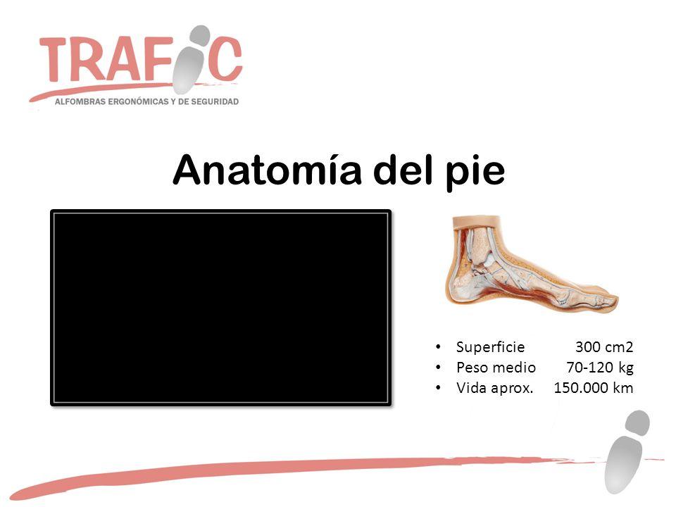 Anatomía del pie Superficie300 cm2 Peso medio70-120 kg Vida aprox.150.000 km