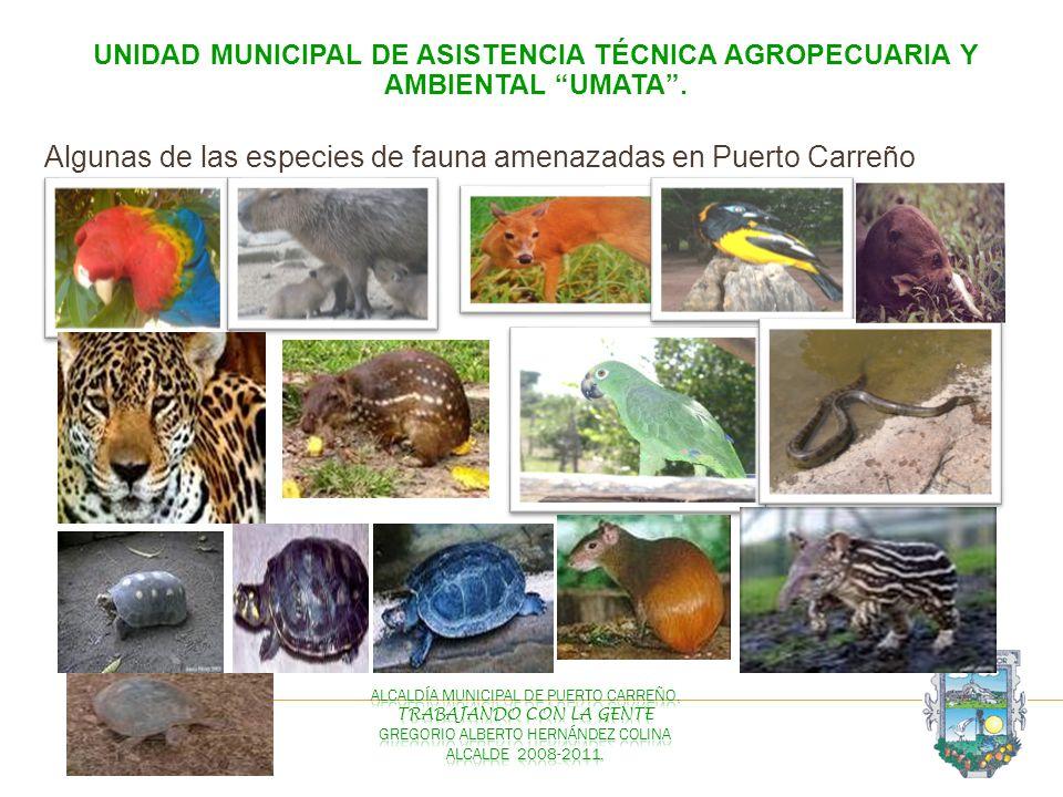 UNIDAD MUNICIPAL DE ASISTENCIA TÉCNICA AGROPECUARIA Y AMBIENTAL UMATA. Algunas de las especies de fauna amenazadas en Puerto Carreño