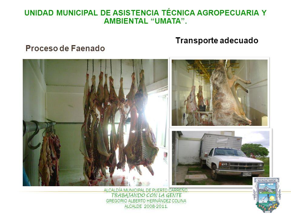 UNIDAD MUNICIPAL DE ASISTENCIA TÉCNICA AGROPECUARIA Y AMBIENTAL UMATA. Proceso de Faenado Transporte adecuado