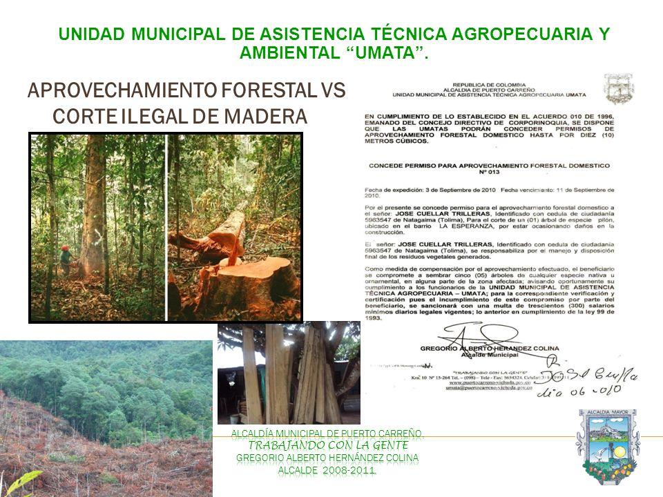 UNIDAD MUNICIPAL DE ASISTENCIA TÉCNICA AGROPECUARIA Y AMBIENTAL UMATA. APROVECHAMIENTO FORESTAL VS CORTE ILEGAL DE MADERA