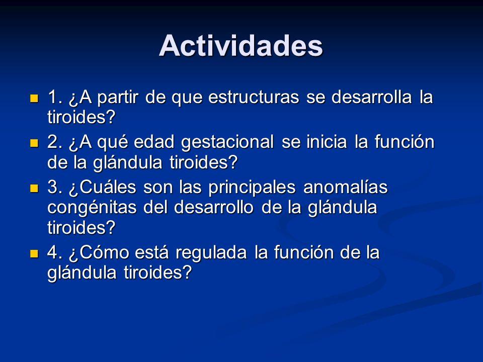 Actividades 1. ¿A partir de que estructuras se desarrolla la tiroides? 1. ¿A partir de que estructuras se desarrolla la tiroides? 2. ¿A qué edad gesta