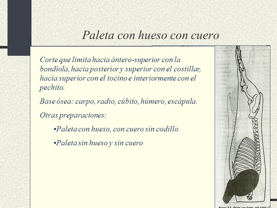 Paleta con hueso con cuero Corte que limita hacia ántero-superior con la bondiola, hacia posterior y superior con el costillar, hacia superior con el