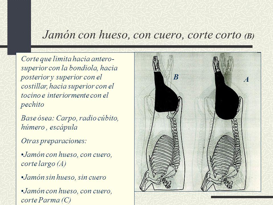 Jamón con hueso, con cuero, corte corto (B) Corte que limita hacia antero- superior con la bondiola, hacia posterior y superior con el costillar, haci