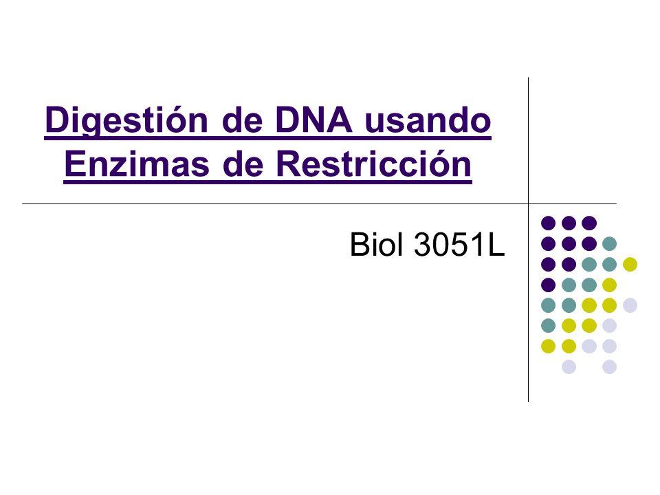 Digestión de DNA usando Enzimas de Restricción Biol 3051L